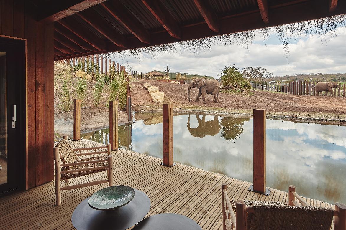 Set Your Elephants For 7am